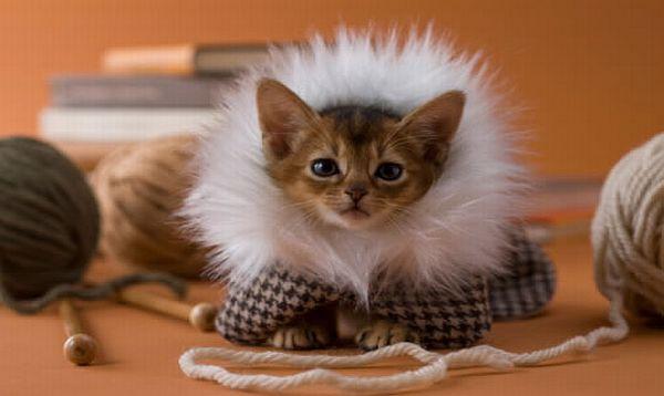 info over kittens