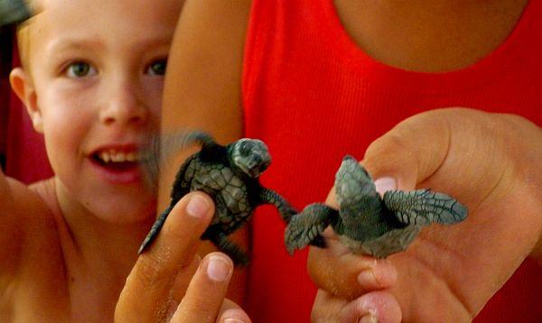 Aquiles y la tortuga yahoo dating