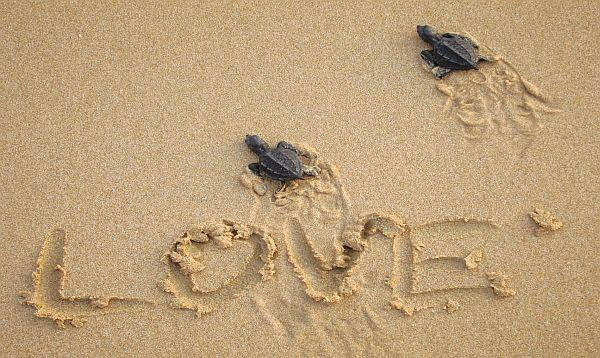 Las alamandas introduces guest program to protect baby sea turtles publicscrutiny Gallery