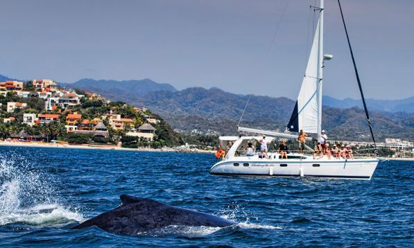 Whale Watching Tours Puerto Vallarta