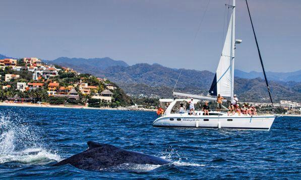 Best Whale Watching Tours In Puerto Vallarta